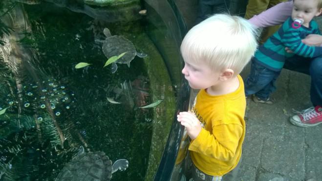 Leelands Favorite: Fish and Turtles