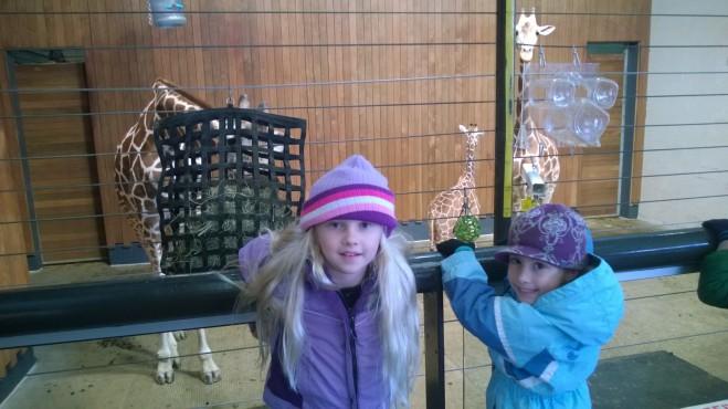 Norah's Favorite the Giraffe