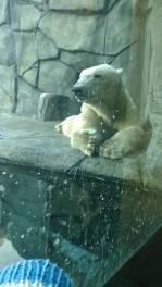 The Polar bear Exhibit was Awesome